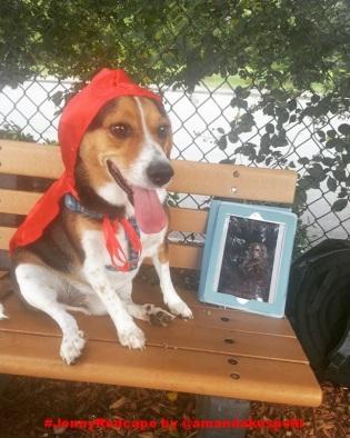 Beagle Bailey Redcape